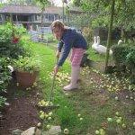 Farm Garden, Bridport, Dorset