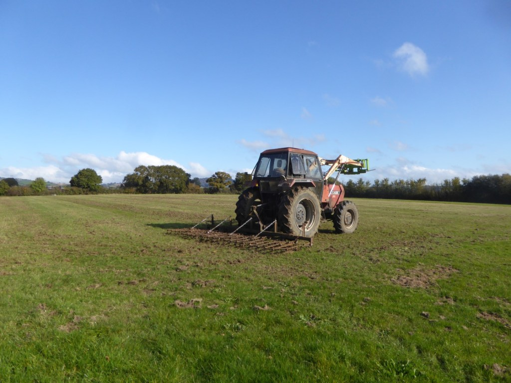 RESEEDING THE MEADOW