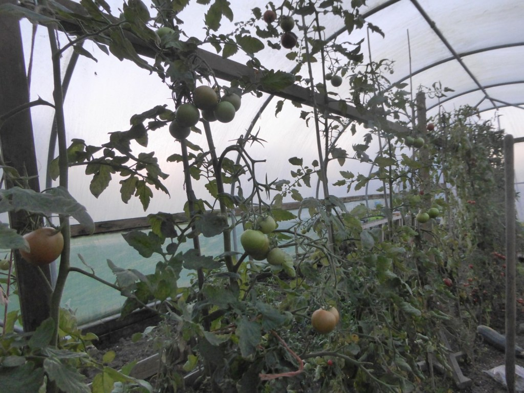 COPSE GATE FARM, BLUNTSHAY LANE, WHITCHURCH CANONICORUM