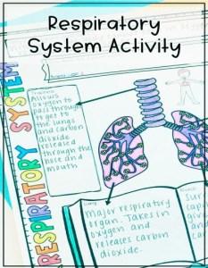 Respiratory system human