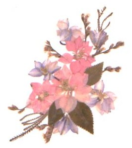 Pinkspray
