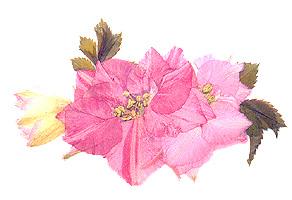 3flowersmall