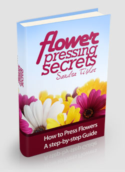 flower pressing secrets book