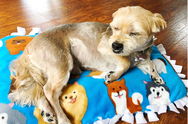 If your dog loves to be comfortable than you'll want to learn How to make your own No-Sew Dog Bed.