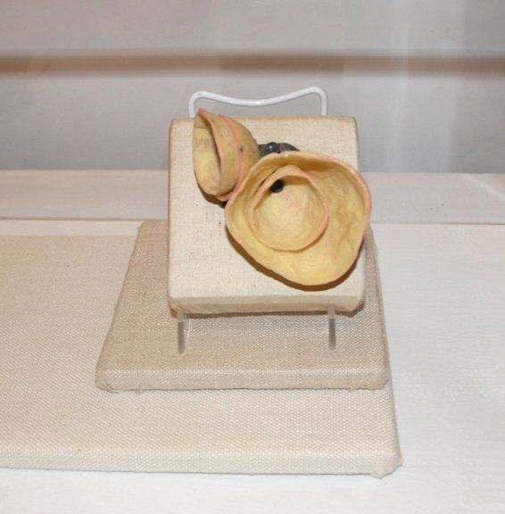 Laura Wood, Sweet Potato Brooch, 2009. Handmade paper, sterling silver, color pencil, wax, and steel. Collection of Tara Locklear