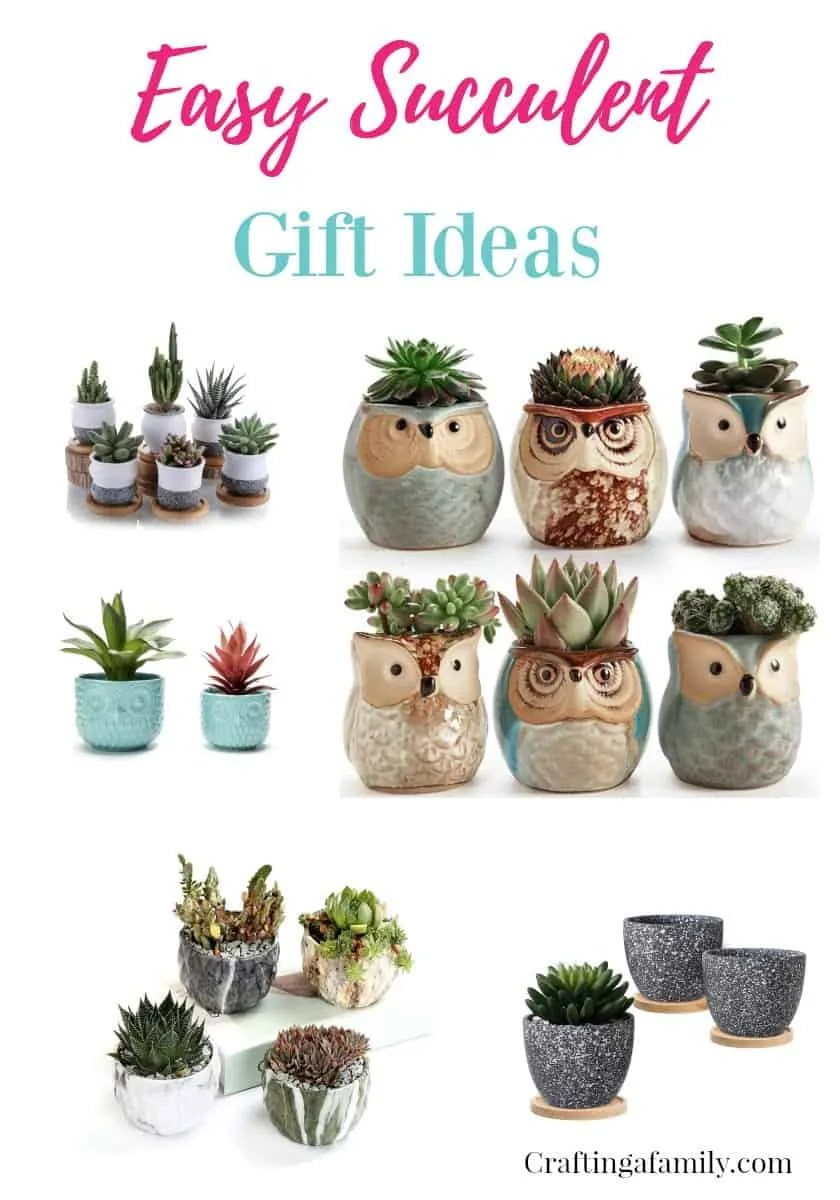 Easy Succulent Gift Ideas  sc 1 st  Crafting a Family & Easy Succulent Gift Ideas ~ Crafting a Family