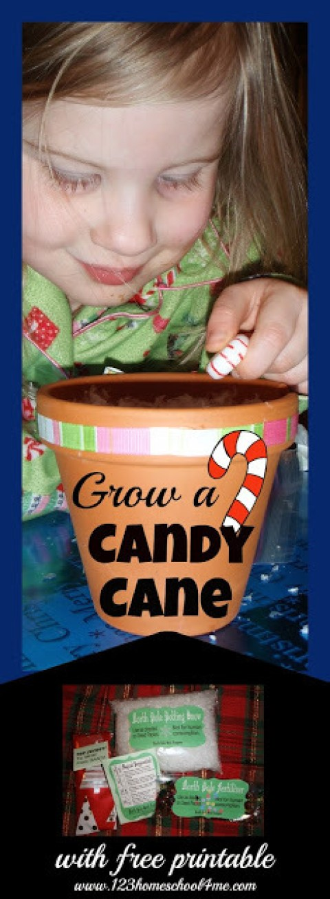 grow-a-candy-cane