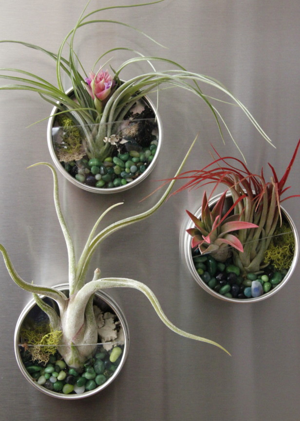 air-plant-fridge-magnet