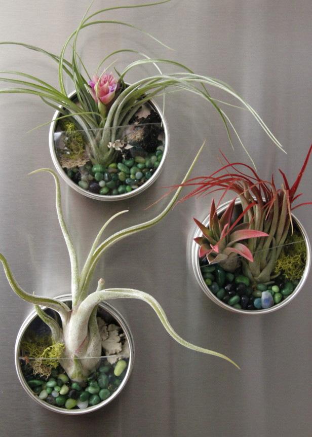 air-plant-fridge-magnet