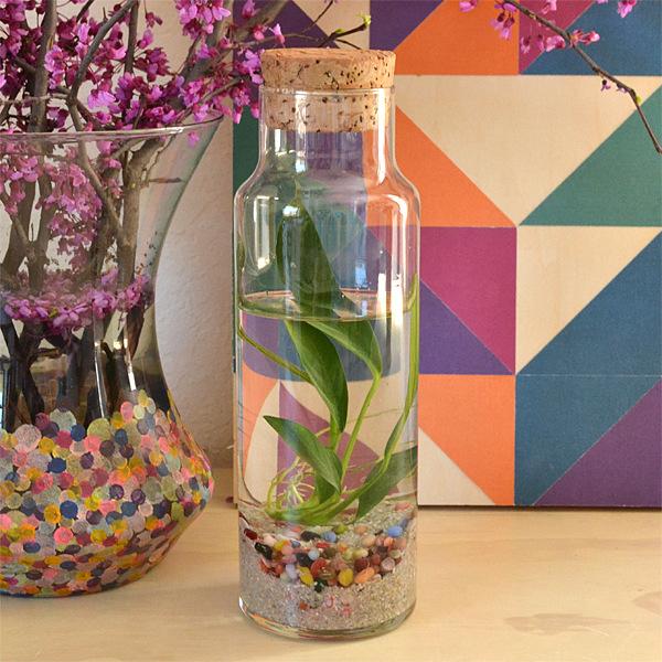 water-plant-terrarium