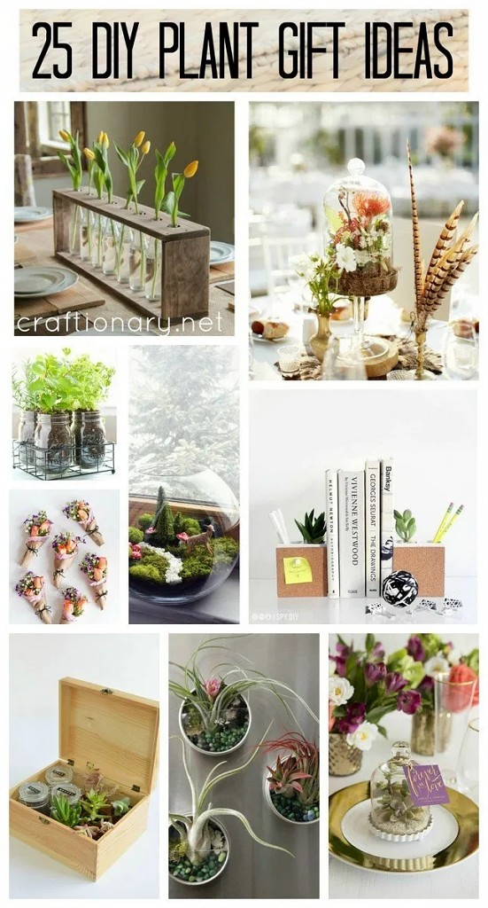 DIY-plant-gift-ideas-for-every-special-ocassion