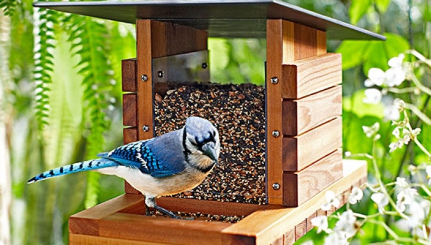 bird watch feeder