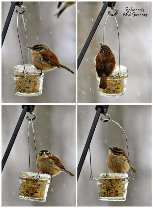 jelly jar bird feeder