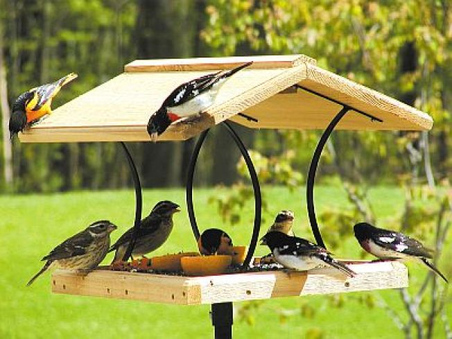 tray changer bird feeder