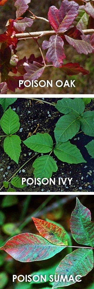 poison oak plant camping hack