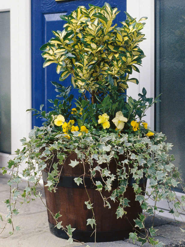 the cold hard facts of protecting potted plants