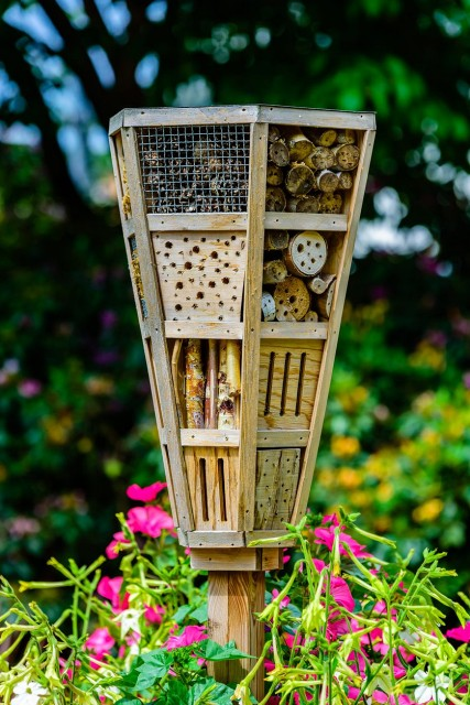 creating-bug-gardens-attracting-beneficial-insects-to-gardens