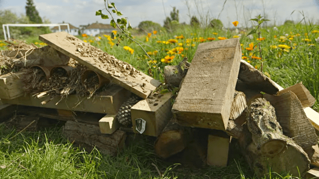 wildlife-author-gill-lewis-explains-how-to-build-a-bug-hotel