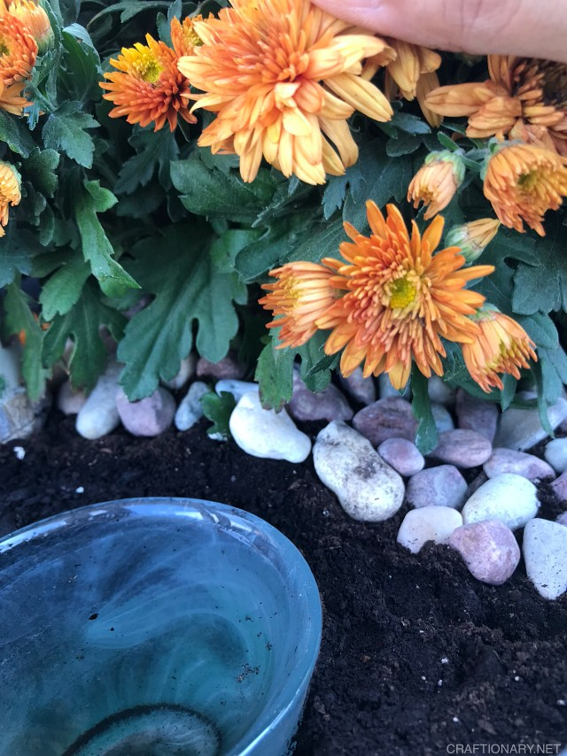 add-pebbles-under-fall-plant-for-detail-2021
