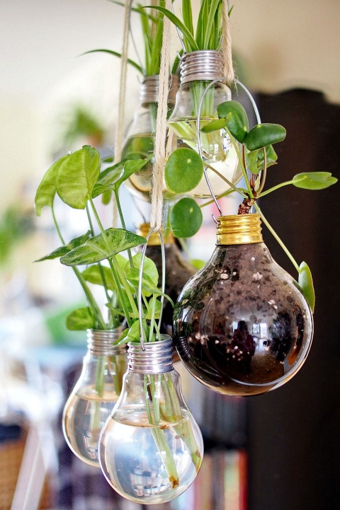hanging-light-bulbs-propagation-planters