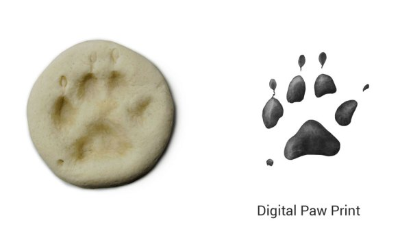 salt dough paw print impression