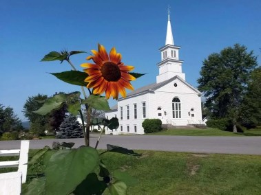 ucc-sunflower-craftsbury-common-vt