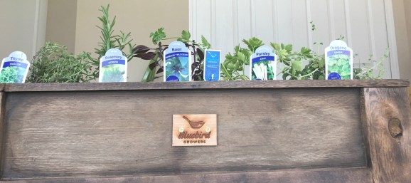 Bluebird Growers Planters Box Review Spaghetti Meal