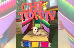 DIY Chihuahua bed, CraftyChica.com
