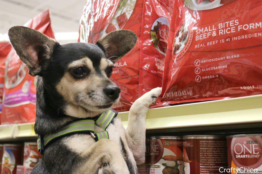 Dog Picks Up Mouthful Of Food