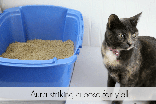 Weruva - natural cat litter. Fresh Aroma, Natural Odor Control and Quick Clumping - Aura