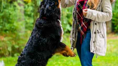 5 Tips To Successfully Training Your Dog