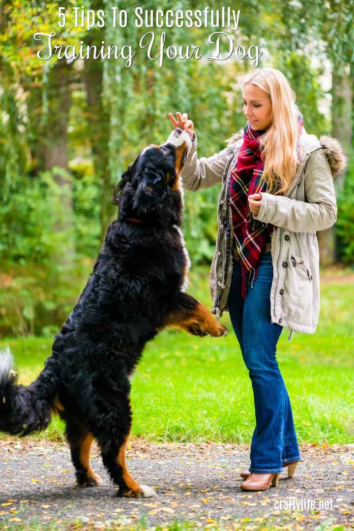 Successfully training your dog is not all that hard. You just need patience, dedication and some simple tactics to teach them the basics!