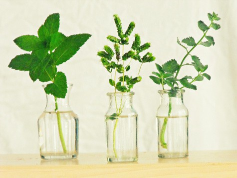 How to Propagate Herbs