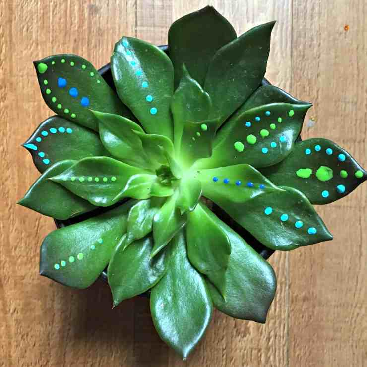 painted-succulents-4