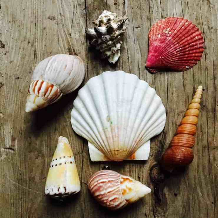 How to Drill a Hole in a Seashell