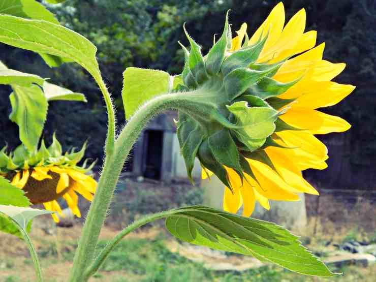 5 Ways to Combat Spring Allergies