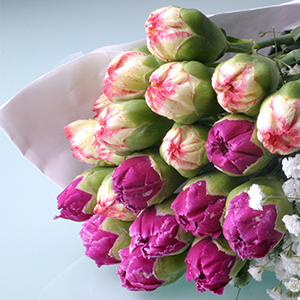 Carnations photo