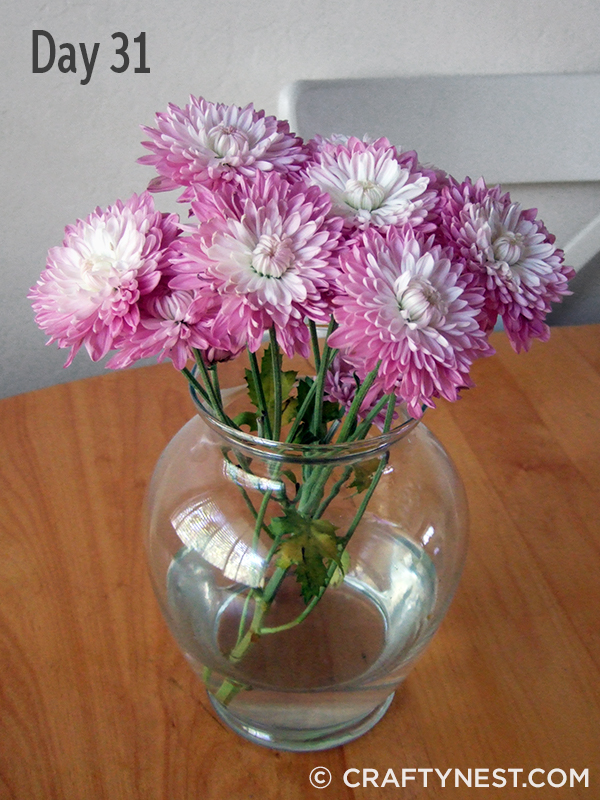 Lavender mums in a vase, photo