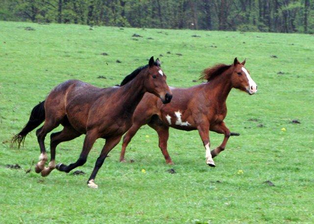 143_horses_running_5