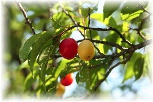 Bearing_fruit