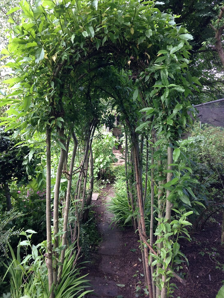 Willow Arch Walkway