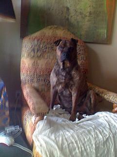 Enter Chairdog