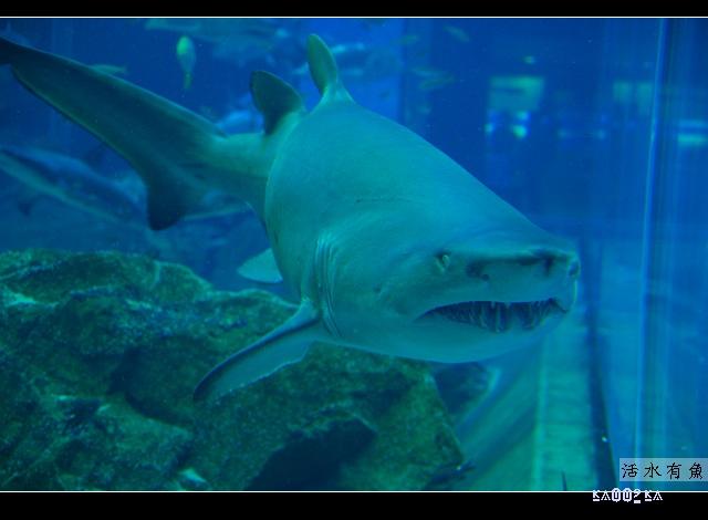 日本-九州-海の中道 水族館 [討論區 - 動物園&水族館 特區] : 鶴齋論壇