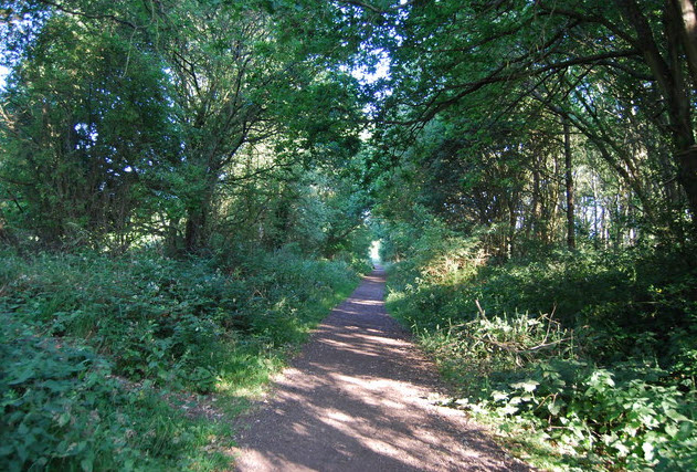 the old cranleigh railway line - downs link