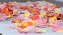 Pickled Rose Petals-006