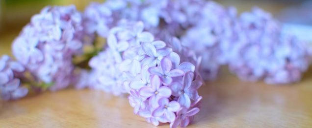 Sugared Lilac Lemon Sheet Cookies-008