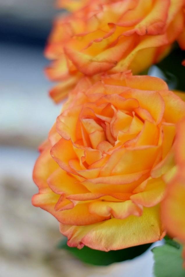 Pistachio Rose Shortbread-013