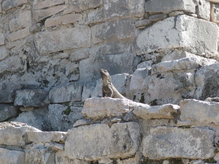 Mayan Ruins Tulum