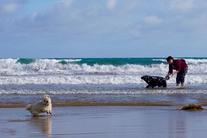 Ocean Grove Beach Dogs