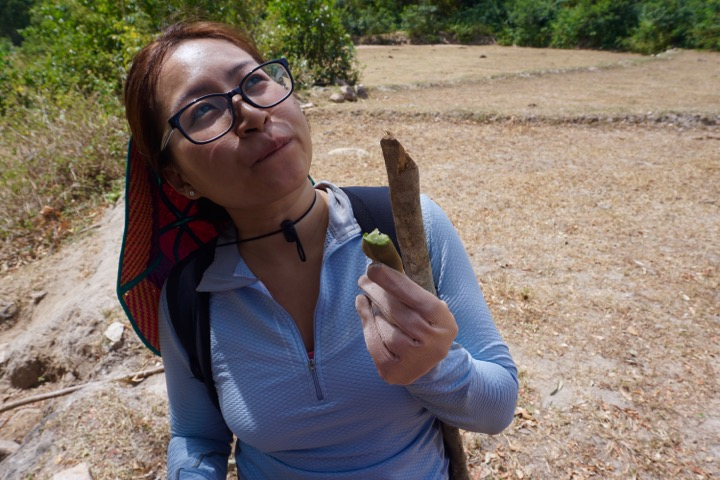 Unripe tamarind - like what we found on our hike - is super sour. Ripe tamarind is like candy.